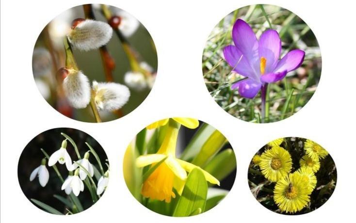 Téma: Jarní květiny